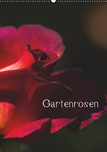 Gartenrosen (Wandkalender 2019 DIN A2 hoch): Rosenblüten: Erwin Renken