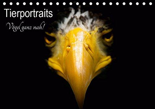 Tierportraits - Vögel ganz nah (Tischkalender 2019: Alexander Honold