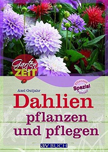 9783704023599: Dahlien pflanzen und pflegen