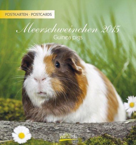 9783731801344: Meerschweinchen 2015 Postkartenkalender
