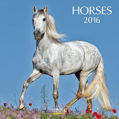 9783731806615: Horses 2016: Brosch�renkalender mit Ferienterminen