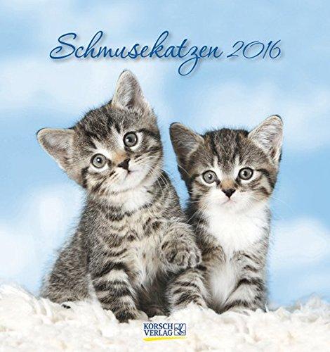 9783731808244: Schmusekatzen 2016. Postkartenkalender