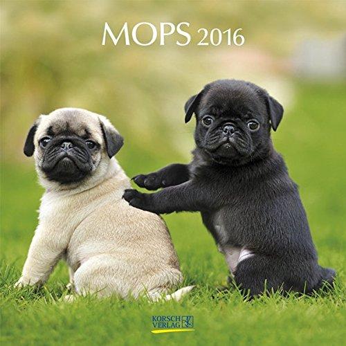 9783731810155: Mops 2016: Broschürenkalender mit Ferienterminen