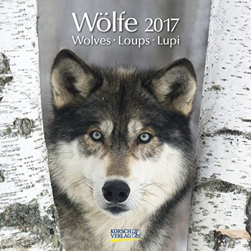 9783731816584: Wölfe 2017. Broschürenkalender