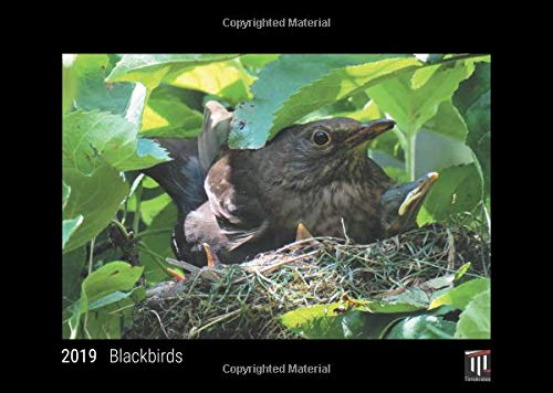 9783732700936: Blackbirds 2019 - Black Edition - Timocrates wall calendar, picture calendar, photo calendar - DIN A3 (42 x 30 cm)