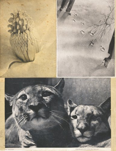 9783775714280: Hannah Höch: Album, Limited Edition