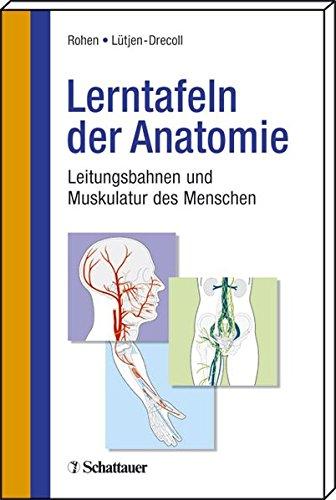 9783794523818: Lerntafeln der Anatomie: Leitungsbahnen und Muskulatur des Menschen