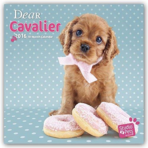 9783800338177: Dear Cavalier 2016 - Cavalier King Charles Spaniel. 18-Monatskalender mit freier DogDays-App