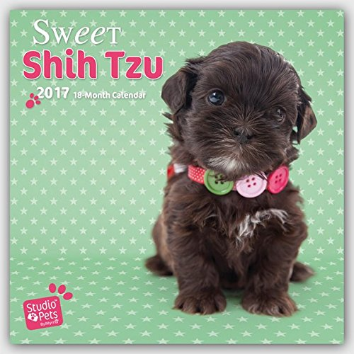 9783800338368: Sweet Shitzu - Shih Tzu 2017 - 18-Monatskalender