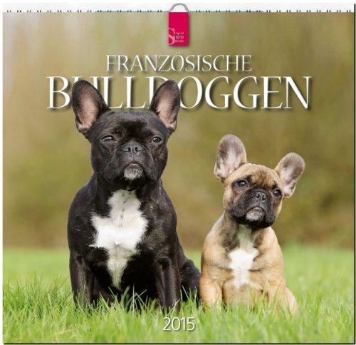 9783800353279: Französische Bulldoggen 2015
