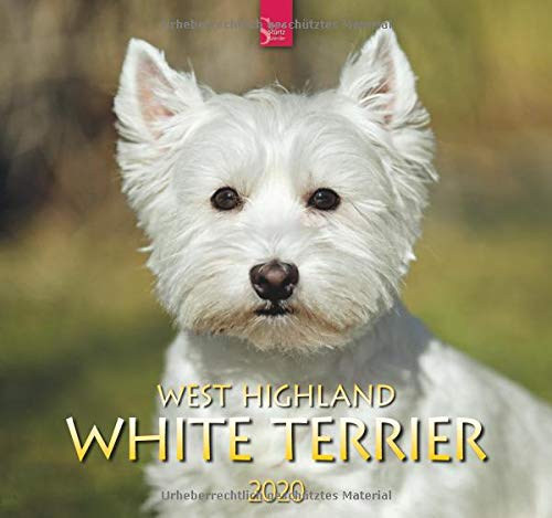 9783800361670: West Highland White Terrier 2020