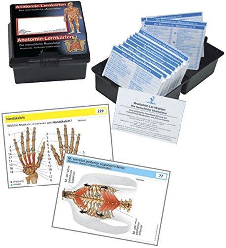 9783808568507: Anatomie-Lernkarten. Die menschliche Muskulatur: Anatomie, Funktion, Innervation