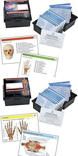 9783808568651: Anatomie-Lernkarten, 2 Tle.