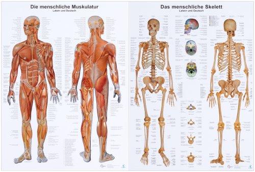 9783808568682: Anatomie-Lehrtafeln im Doppelpack \' Die menschliche ...