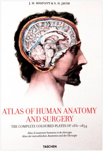 9783822831298: XL-BOURGERY ATLAS ANATOMIE