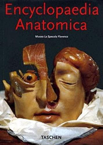 9783822838488: Ko-encyclo anatomica (Klotz)