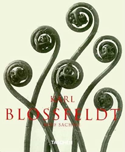 Karl Blossfeldt: Photographs (Albums): Blossfeldt, Karl, Sachsse,