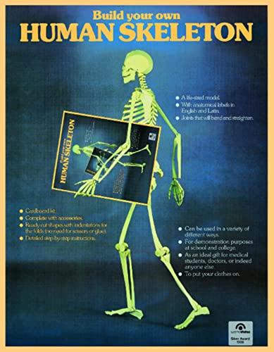 9783822895016: Human Skeleton