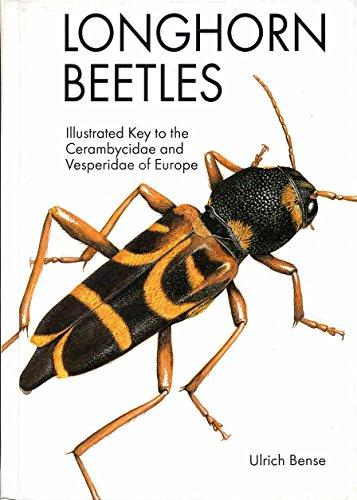 9783823611530: Longhorn Beetles: Illustrated Key to the Cerambycidae of Europe
