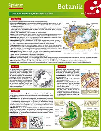 9783827421302: Lerntafel: Botanik im Überblick (Lerntafeln Biologie) (German Edition)
