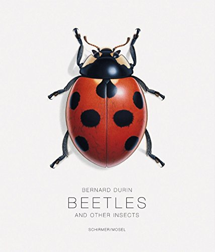 Beetles and Other Insects Scherer, Gerhard