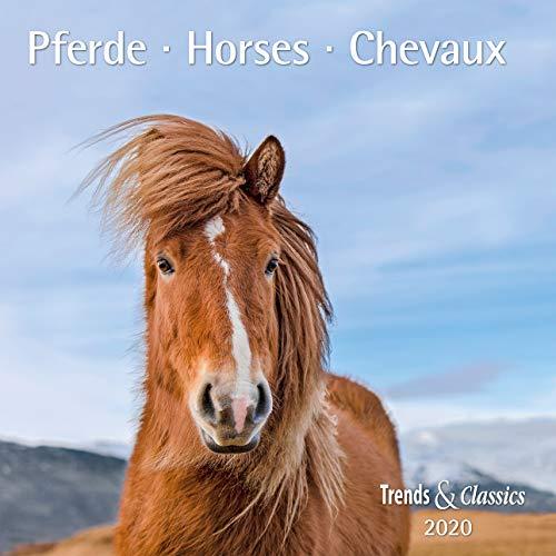 9783832041373: Pferde Horses 2020 - Broschüren-Wandkalender inkl Poster