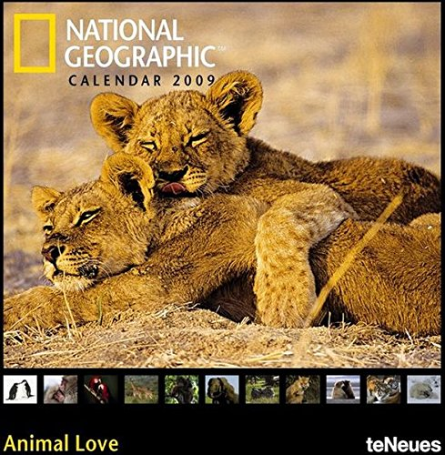 9783832727314: 2009 National Geographic Animal Love Photo Calendar