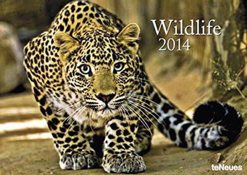 9783832767082: 2014 Wildlife 29.7 X 42 Calendar
