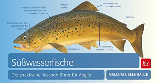 9783835408913: S��wasserfische: Der praktische Taschenf�hrer f�r Angler