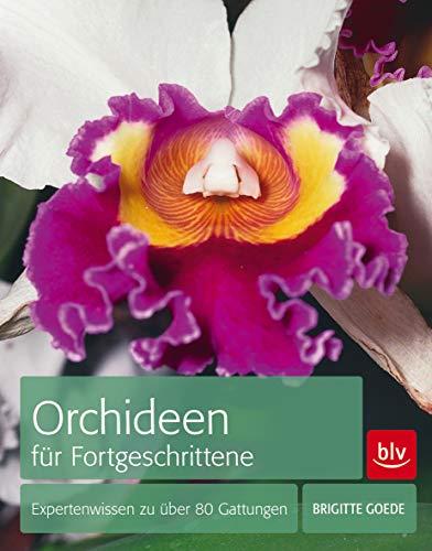 9783835411975: Orchideen für Fortgeschrittene: Expertenwissen zu über 80 Gattungen