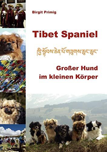 Tibet Spaniel: Birgit Primig
