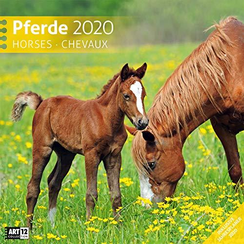 9783838440217: Pferde 2020, Wandkalender / Broschürenkalender im Hochformat (aufgeklappt 30x60 cm) - Geschenk-Kalender mit Monatskalendarium zum Eintragen