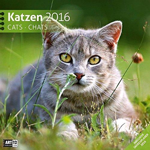 9783838456201: Katzen 2016 Art12 Collection: Broschürenkalender. Inlusive 10 beliebig oft verschiebaren Markern