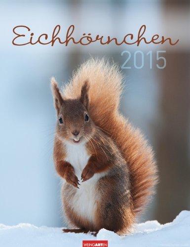 9783840063091: Eichhörnchen 2015