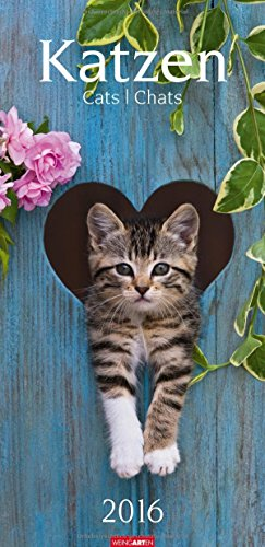 Katzen 2016 : Cats; Chats