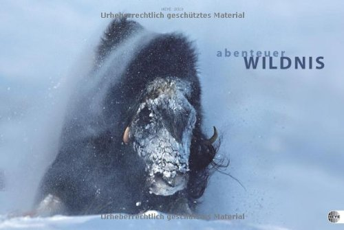 9783840113314: Abenteuer Wildnis 2013 / Wildlife Adventures