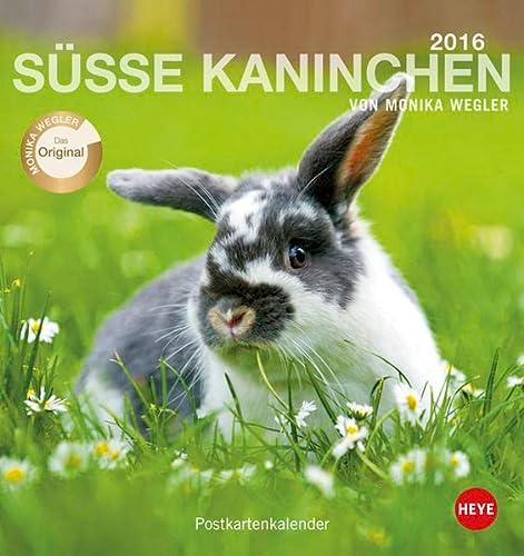 9783840135552: Kaninchen Postkartenkalender 2016