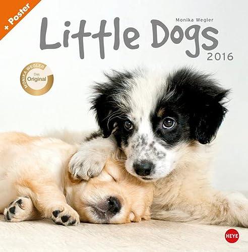 9783840135958: Wegler Little Dogs Broschurkalender 2016