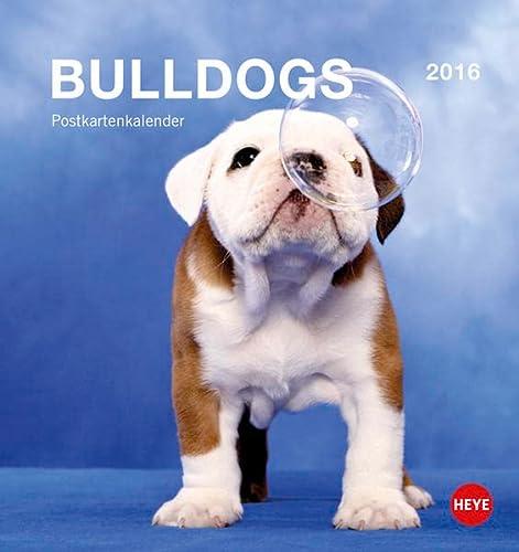 9783840137631: Bulldogs 2016 Postkartenkalender