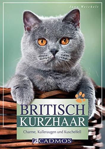 9783840440021: Britisch Kurzhaar: Charme, Kulleraugen und Kuschelfell