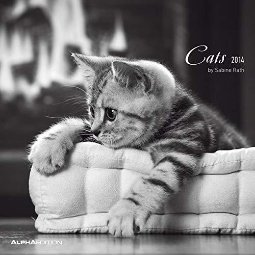 9783840741135: Cats 2014 Brosch�renkalender: Brosch�renkalender