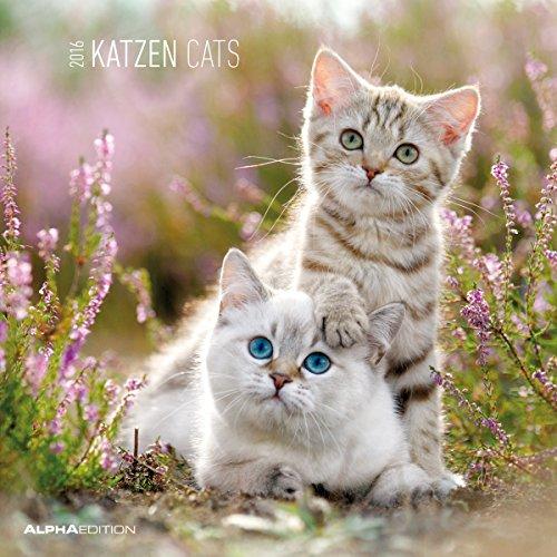9783840760501: Katzen 2016 - Cats - Broschürenkalender (30 x 60 geöffnet) + LESEZEICHENKALENDER (5,5 x 16,5) - Vorteils-Bundle - Tierkalender - Wandplaner