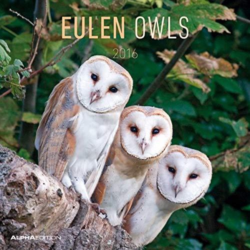 9783840761096: Eulen 2016 - Owls - Broschürenkalender (30 x 60 geöffnet) - Tierkalender - Wandplaner