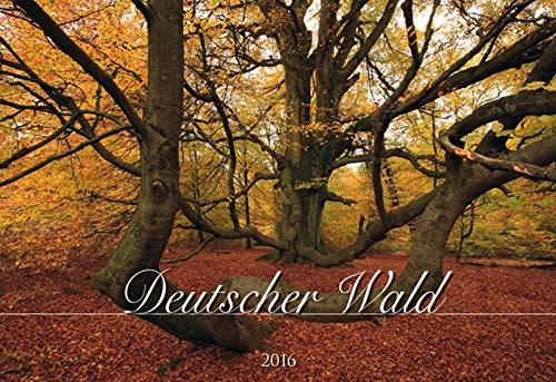 9783840763489: Deutscher Wald 2016 - Bildkalender quer (50 x 34) - Bäume - Landschaftskalender - Naturkalender