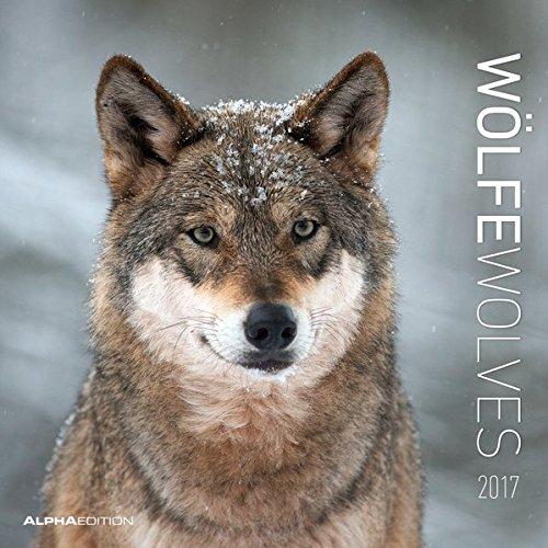 9783840771088: Wölfe 2017 Broschürenkalender