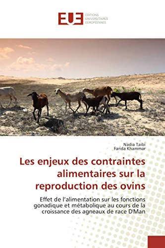 9783841667731: Les enjeux des contraintes alimentaires sur la reproduction des ovins: Effet de l'alimentation sur les fonctions gonadique et métabolique au cours de la croissance des agneaux de race D'Man