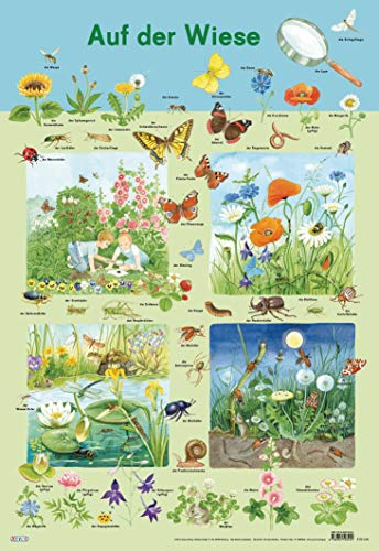9783845503424: Mein Lernposter Auf der Wiese: Blumen und Krabbeltiere