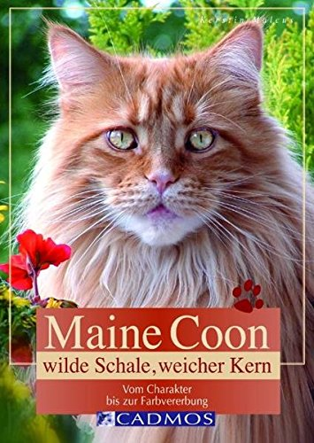 9783861271345: Maine Coon: Wilde Schale, weicher Kern