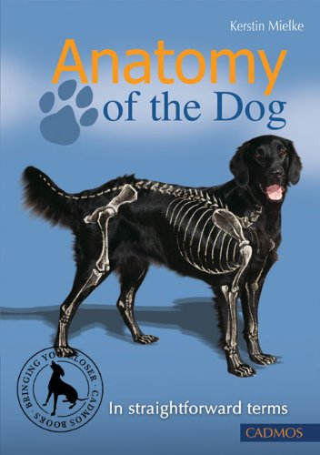 Anatomy of the Dog In Straightforward Terms