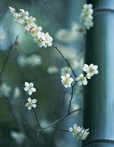 9783863237257: Zen Blossoms (Blank Books)